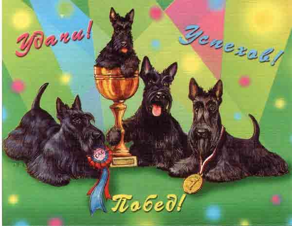 Мои поздравления с победой на соревнованиях
